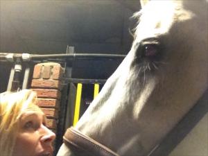 relatie met je paard verbeteren